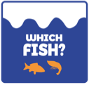Which Fish